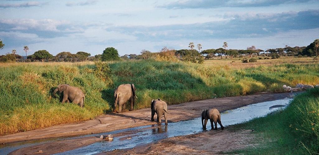 Esperienza in Tanzania