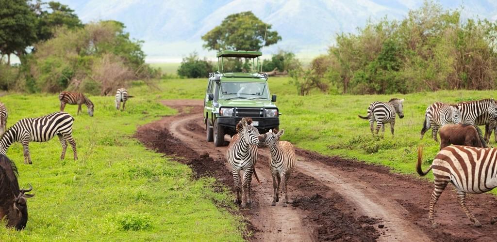 SAFARI NEI PARCHI DELLA TANZANIA