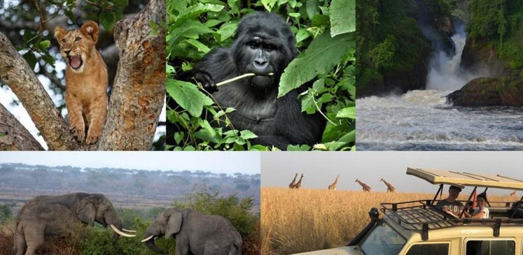 Uganda, la terra dei Gorilla!